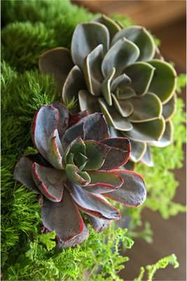 Beautiful succulent arrangement by Kaitlyn Jones Floral Design